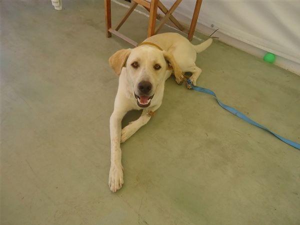 el perro de Cirkea en el campamento de verano ingles