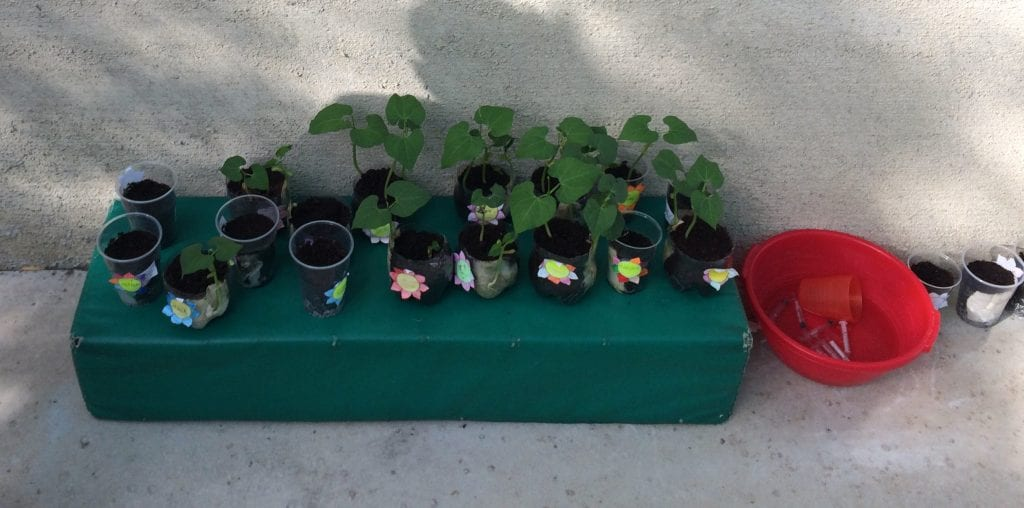 plants growning quickly